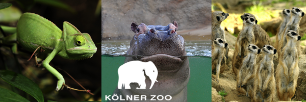 Cologne Zoo - Germany\'s third oldest zoo