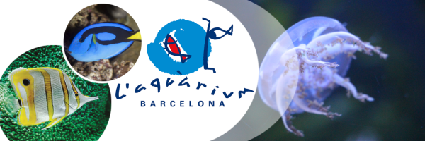L\'Aquàrium Barcelona: the underwater world of the Mediterranean Sea