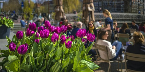 When to Amsterdam? Great Events and Highlights
