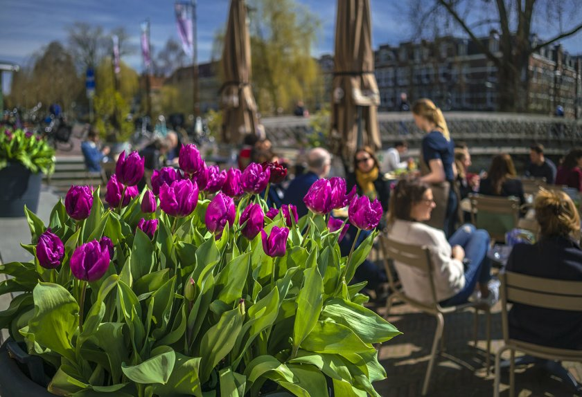 Tulp Festival Amsterdam - April event tip for Amsterdam