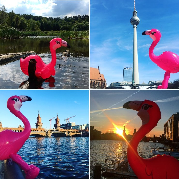 Travel with Pinky - Flamingo in Berlin